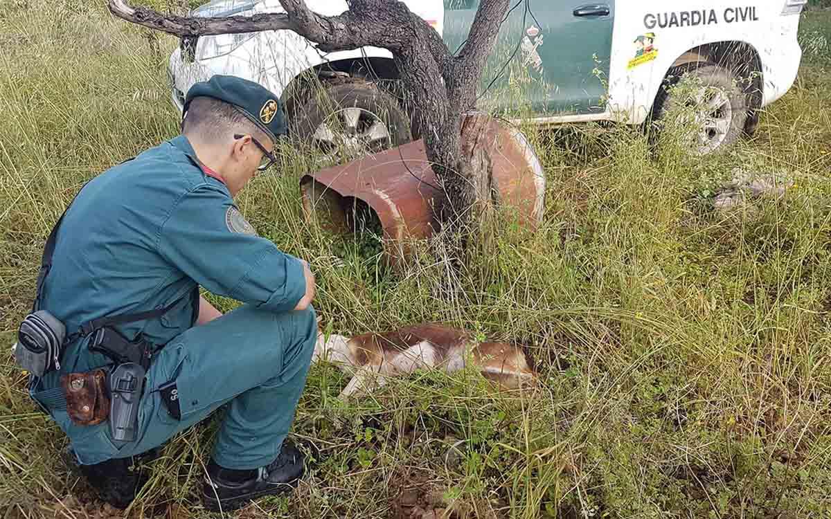 Denuncia penal a un vecino de Tortosa para dejar morir una perra que acababa de criar