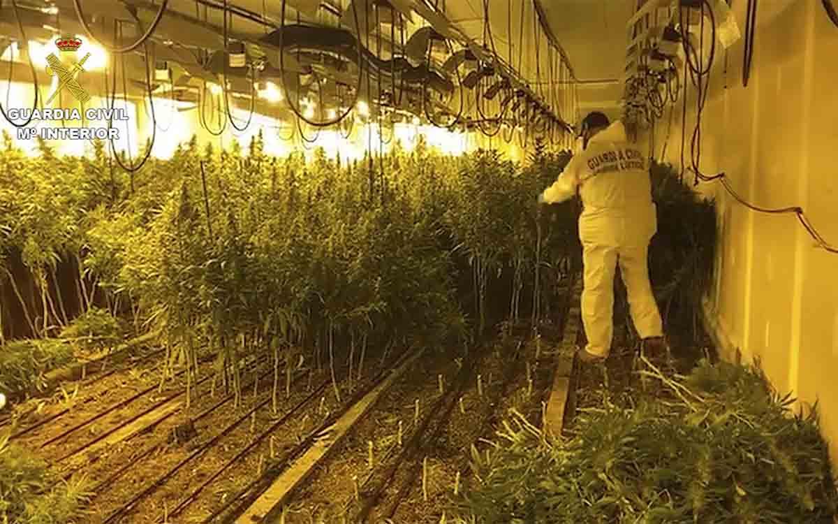 Desmanteladas dos narconaves de marihuana en Llinars del Vallès