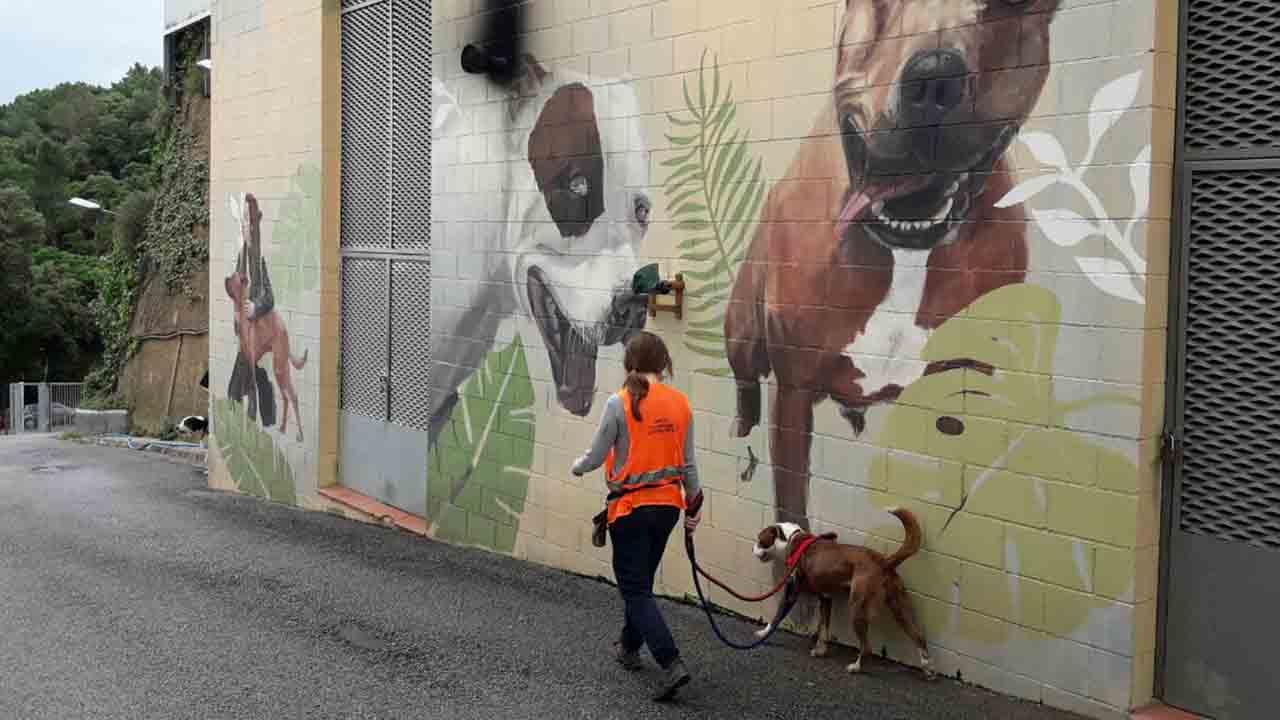 Aumenta la adopción de animales de compañía en Barcelona