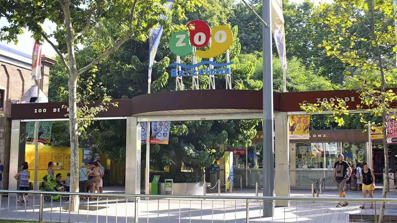 El Zoo de Barcelona vuelve a abrir con aforo limitado al 50%