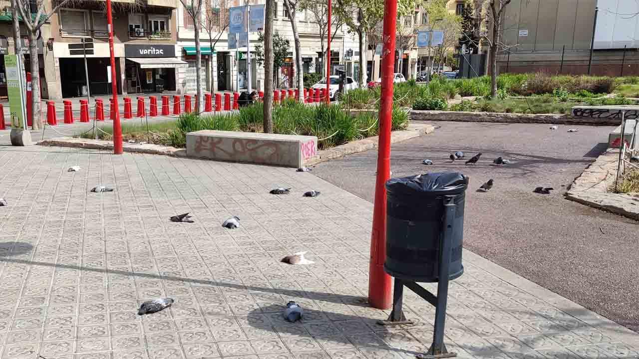 Investigan la muerte de decenas de palomas en la esquerra del Eixample