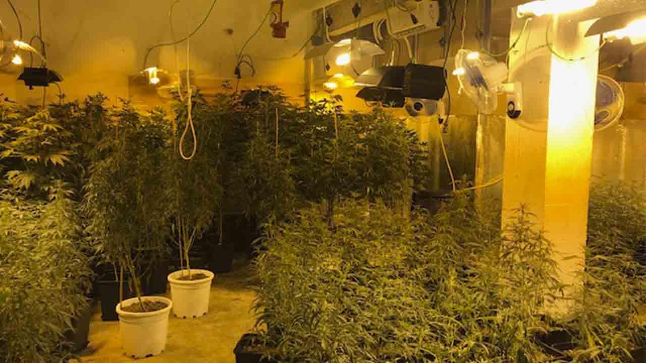 Decomisan una plantación de marihuana en un local del barrio de El Carmel