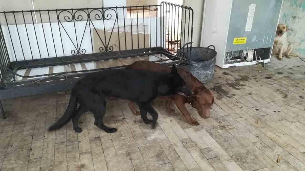 La Guàrdia Urbana de Barcelona rescata tres perros abandonados en una casa