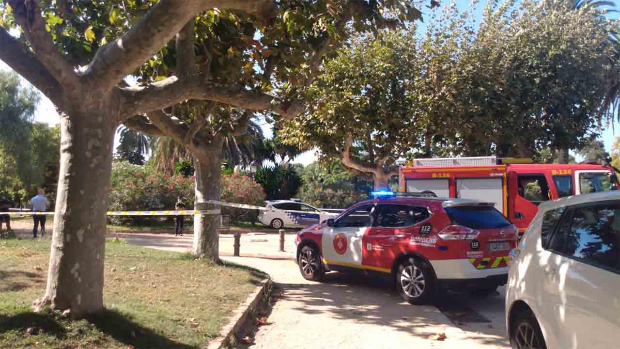 Muere un hombre al caerle una palmera en el Parque de la Ciutadella de Barcelona