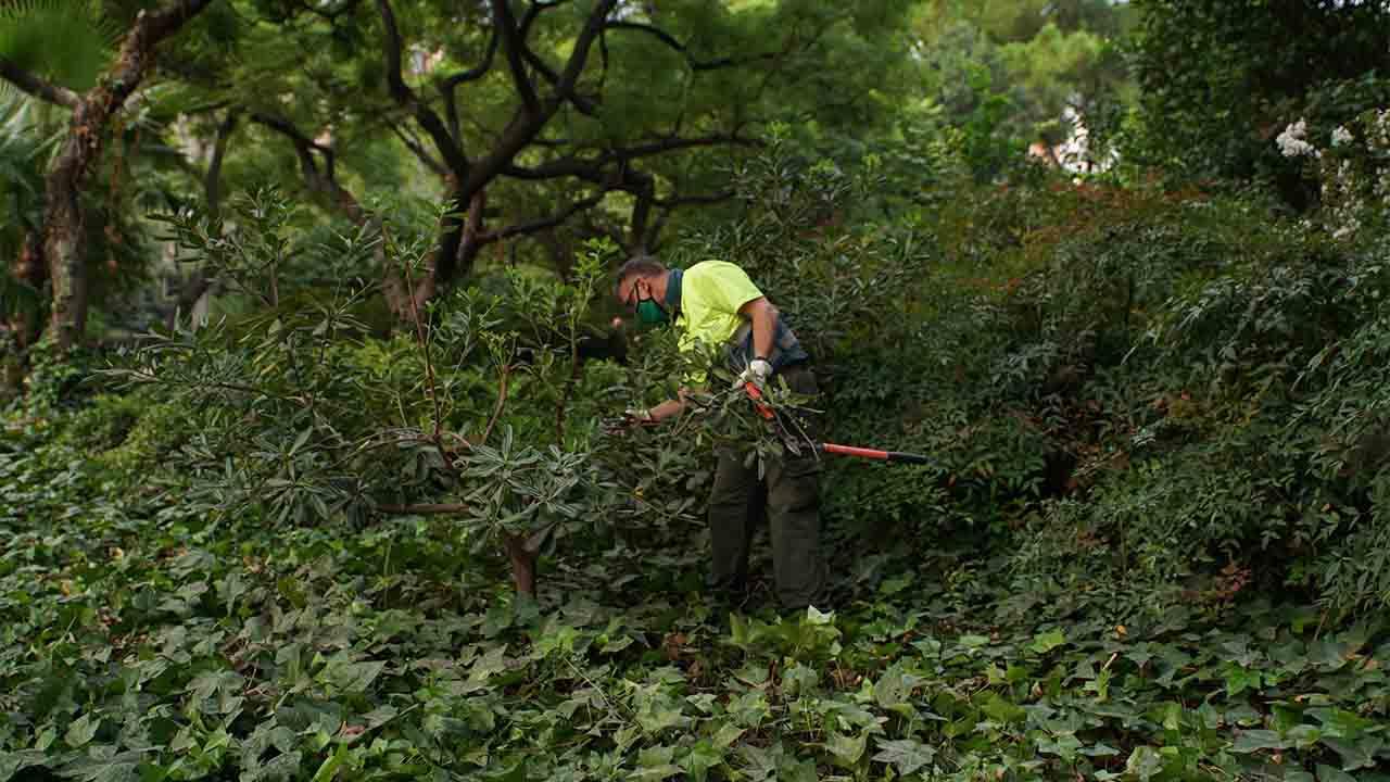Barcelona refuerza el mantenimiento del verde durante el otoño