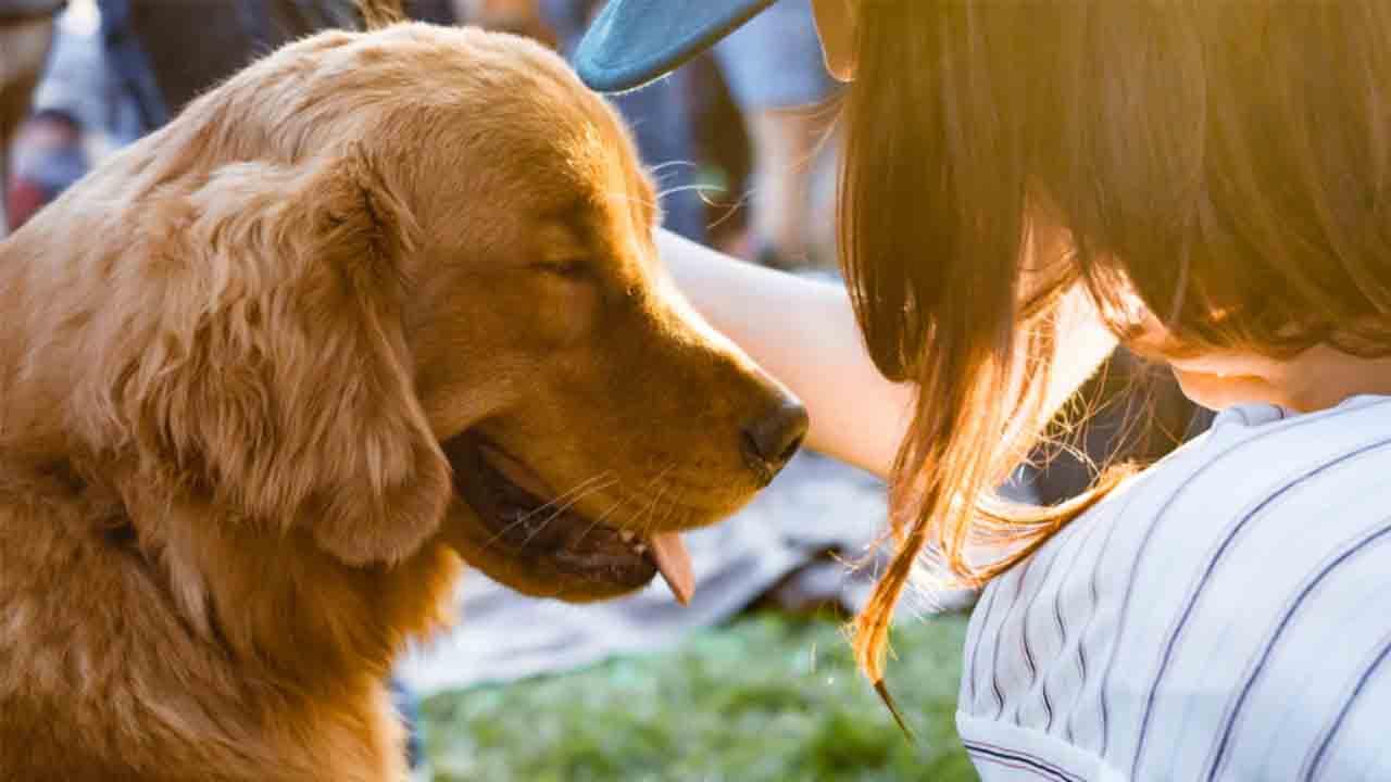 Compromiso de Barcelona contra el maltrato animal