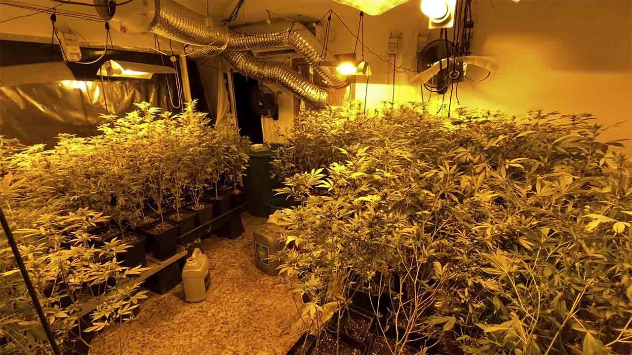 Desarticulado un grupo que vendía droga a través de una asociación cannábica