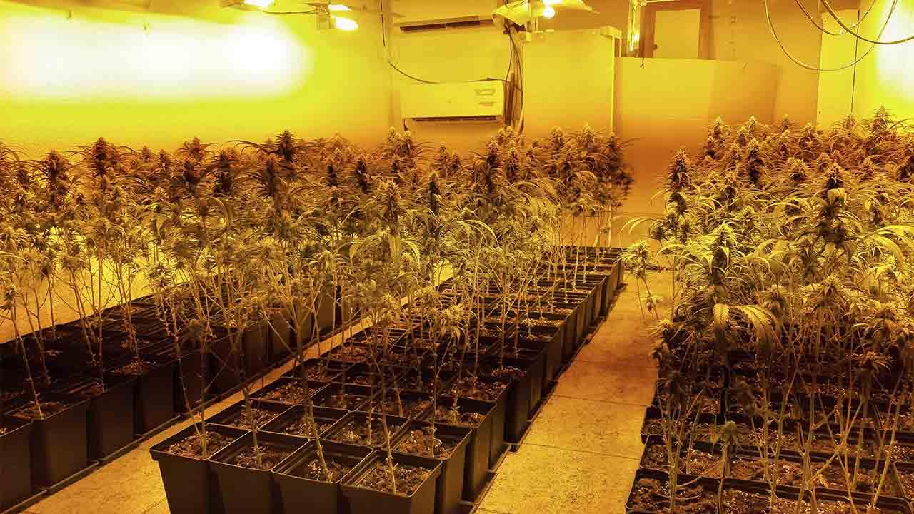 Desmantelados cuatro pisos en Badalona destinados al cultivo de marihuana