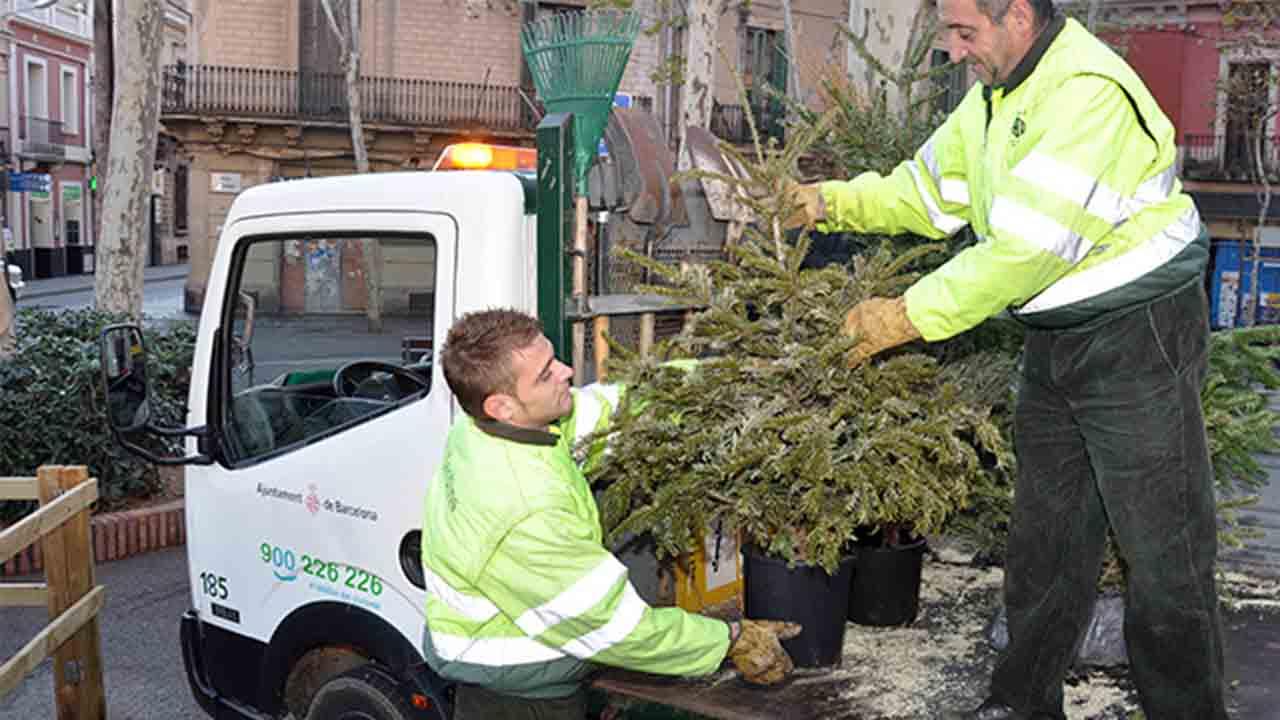 El Ayuntamiento instala 226 puntos de recogida de árboles en los diez distritos de la ciudad