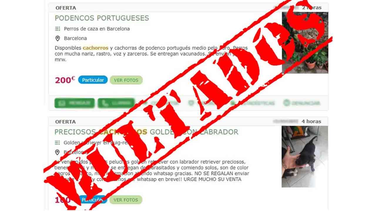 'Mil Anuncios' paga 150.000 € de multa por la publicación de venta de animales