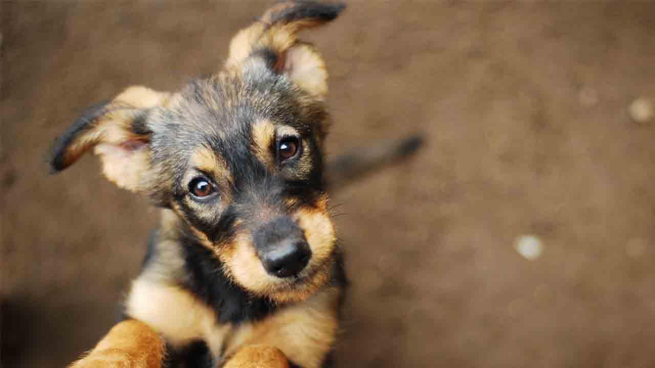 507 perros y 413 gatos adoptados en Barcelona en el último año