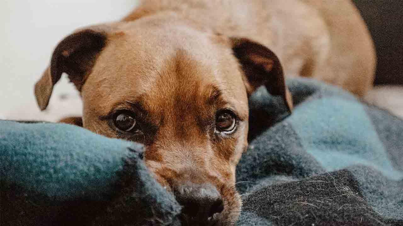 Aprobada la convocatoria de subvenciones para las entidades animalistas