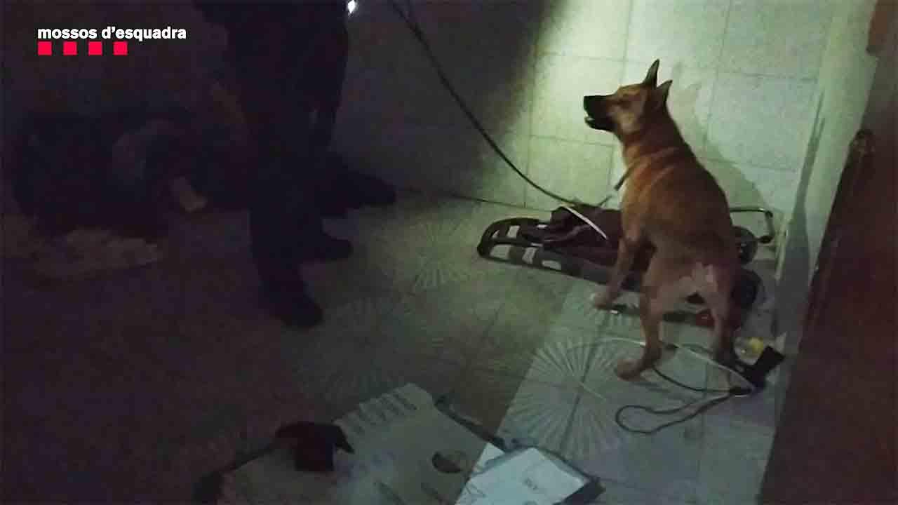 Desmantelado un piso ocupado en Hospitalet que se usaba para venta de cocaína