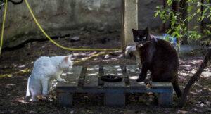 Nuevas subvenciones para entidades que cuidan de colonias de gatos