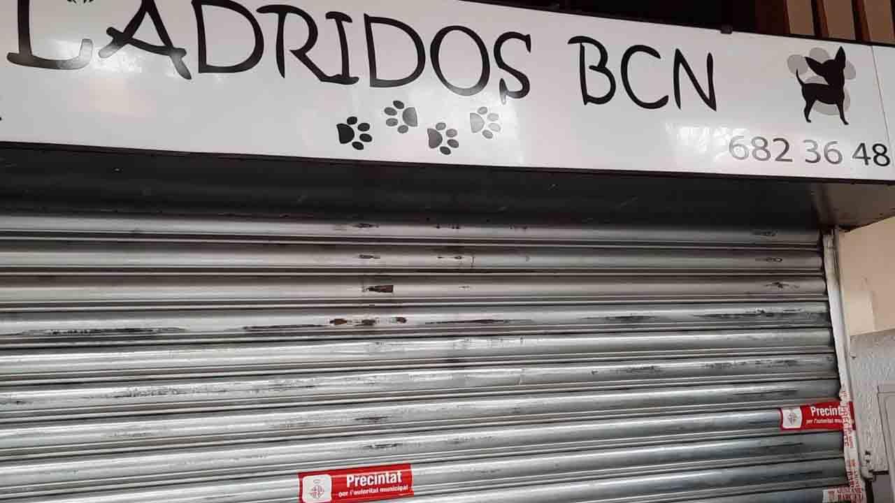 Precintada la tienda 'Ladridos' por las graves deficiencias