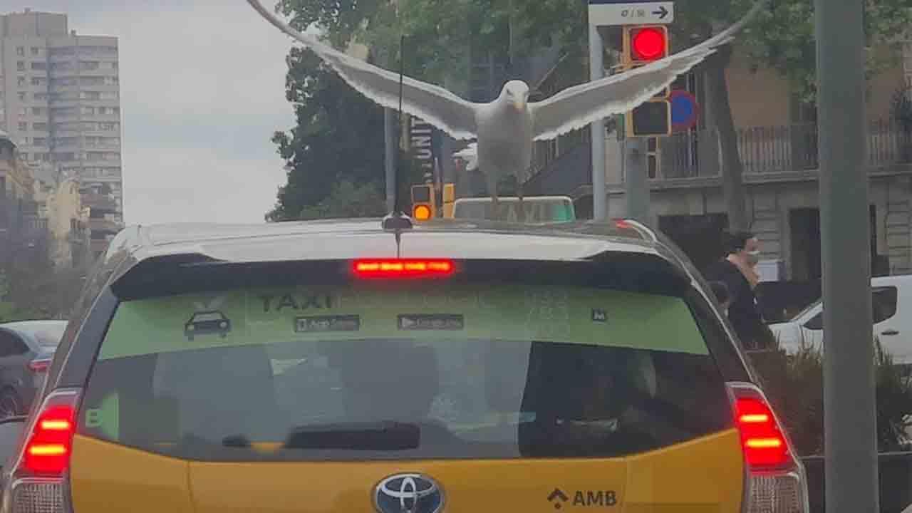 El Espíritu Santo va en taxi