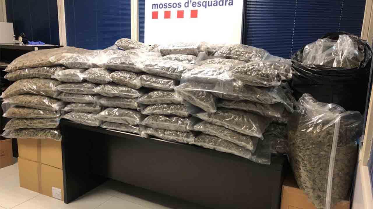 Detenido un hombre que tenía 150 kilos de marihuana en su casa