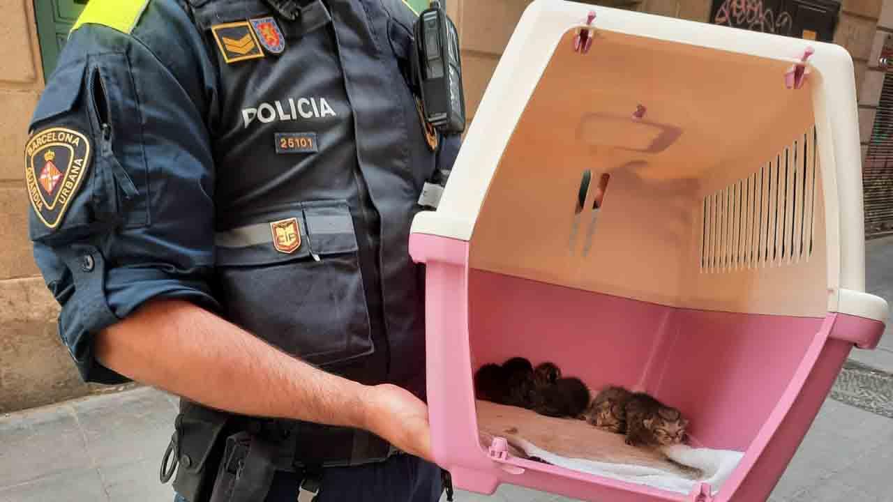 Intervenidos 37 gatos y un conejo en un caso de síndrome de Noé