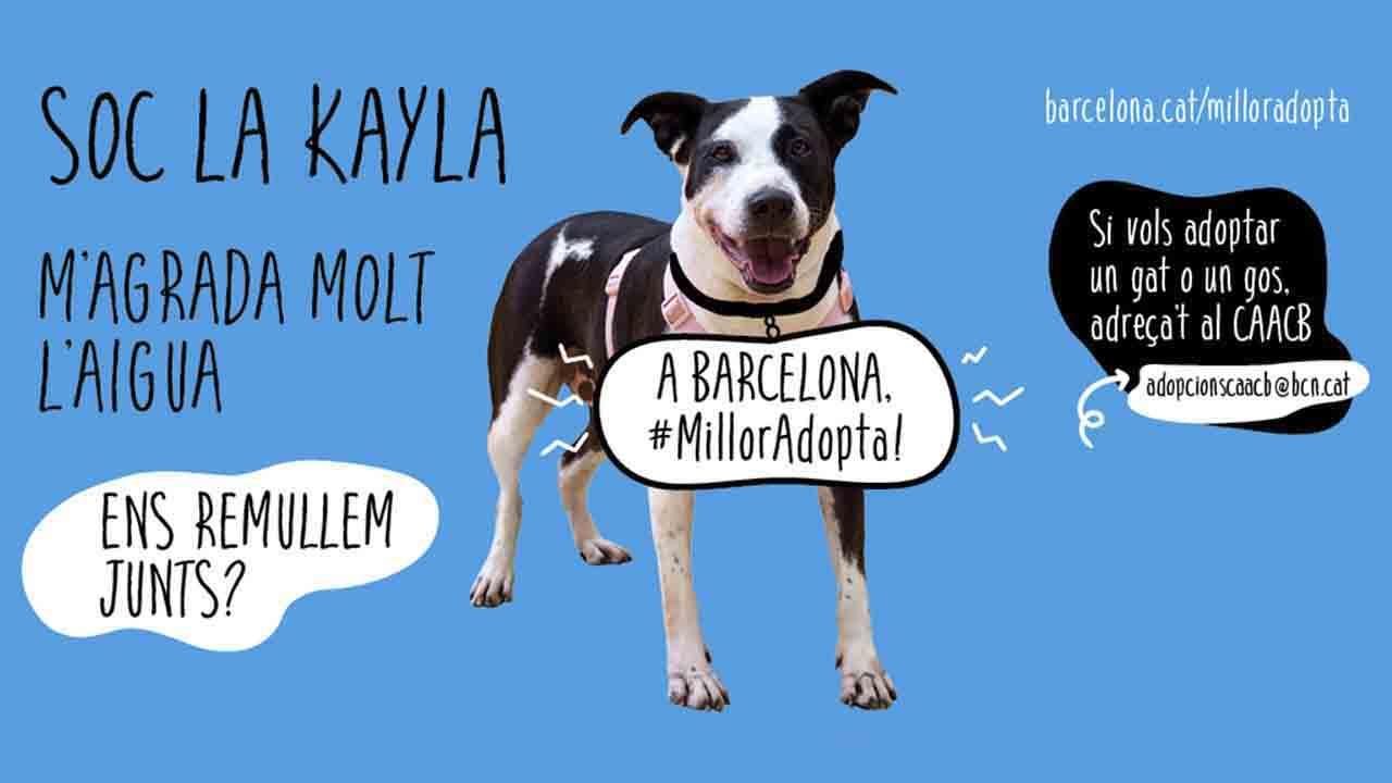 """""""A Barcelona, #MillorAdopta!"""", campaña de adopción desde la Mercè a Navidad"""